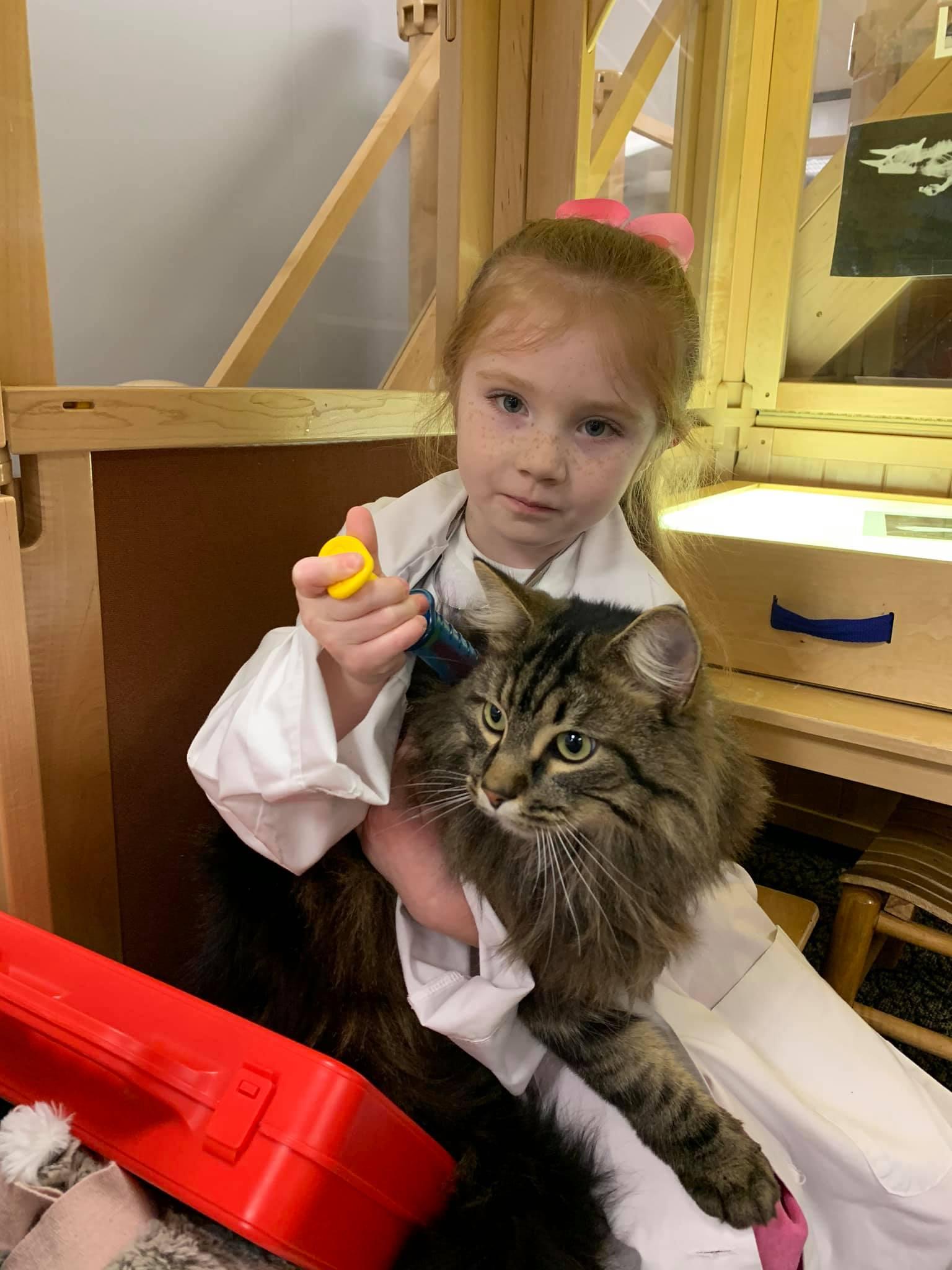 A preschooler examines Mason the cat.